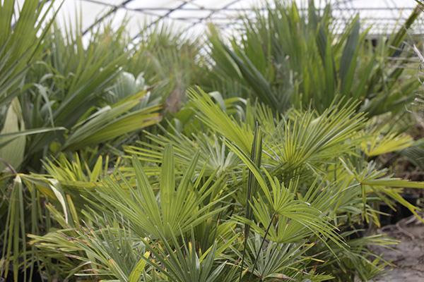 apercu-tunnel-palmiers01
