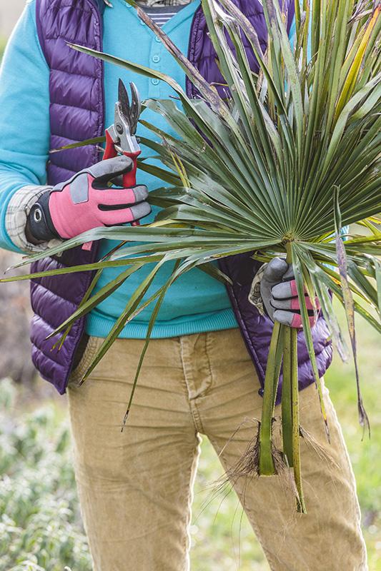 Comment tailler un palmier palmiers et compagnie - Comment couper un palmier mort ...