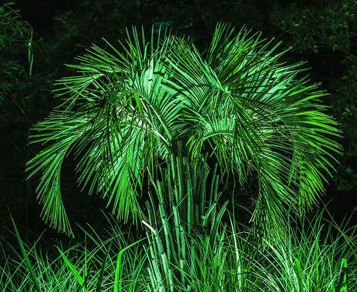 Rendez votre palmier encore plus beau avec l'éclairage nocturne