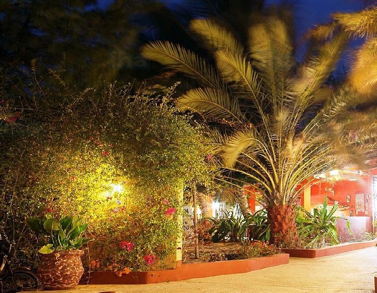 Palmier ananas éclairé de nuit.
