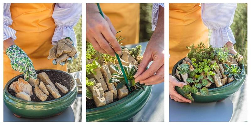 crevice garden en pot : réalisation d'un jardin de fissures en pas à pas en pot
