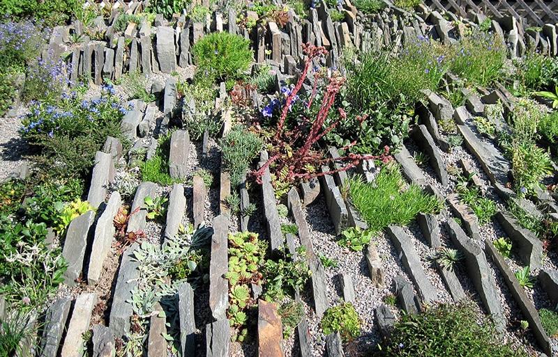 jardin de crevasse