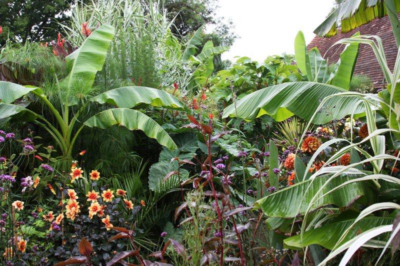 Comment aménager un coin exotique dans un petit jardin ?