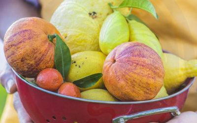 Comment faire fructifier un agrume ?