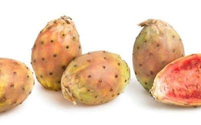 Comment cultiver et réussir le figuier de Barbarie (Opuntia ficus-indica)