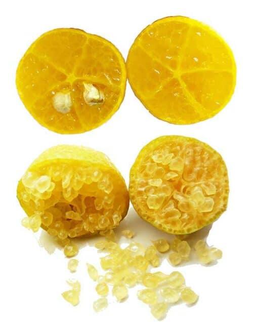 Erémorange, Citrus glauca x Citrus sinensis